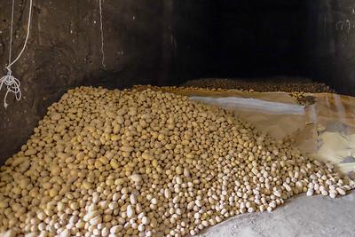Many potatoes...