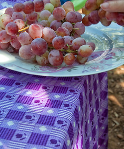 At a village home hosted lunch, freshly picked grapes