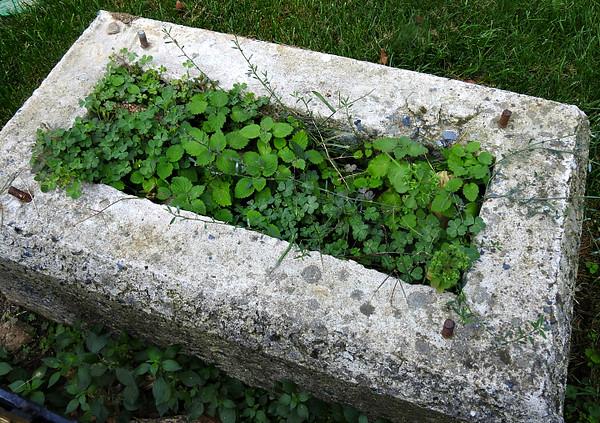 Assorted Wild Plants