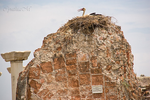 Storks nesting at Basilica of St. John