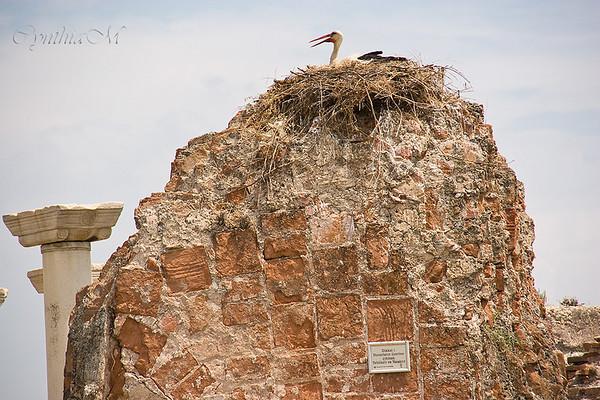 Storks nesting at Basilica of St. John