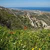 The Spring flowers are beautiful in Cyprus