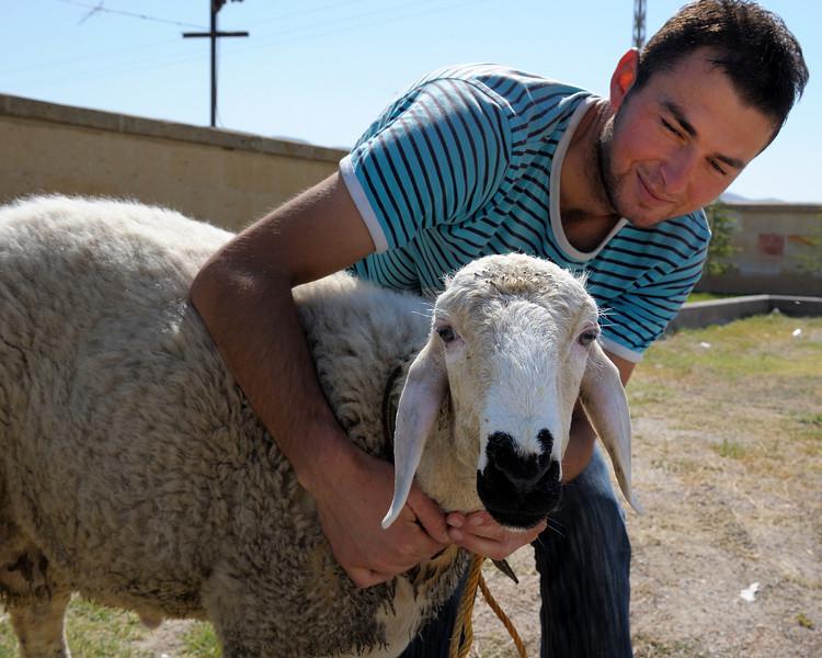 Goat at Caravanseri