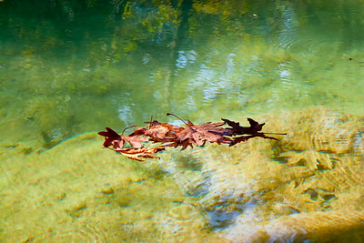 Floating leaves near the upper Duden falls
