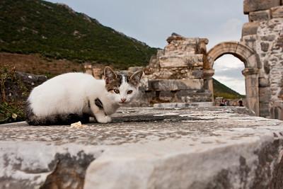 One of the many strays running around Ephesus.