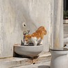 Cat washing outside mosque