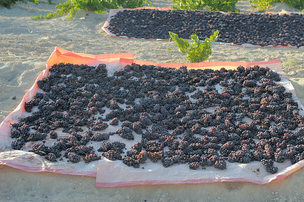 Grapes, soon to be rasins