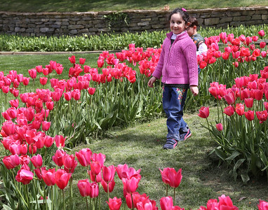 Gulhane park, full of tulips (they originated here not Holland)