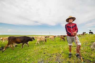 Herder. Plains around Ani, Eastern Turkey.