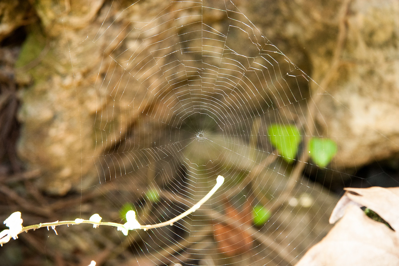 A perfect spider web