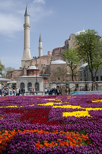 Turkey is famous for its tulips.  This is a carpet of over half a million tulips in front of the Haghia Sofia mosque