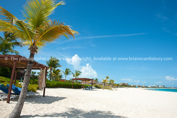 Palm tree on beach, Caribbean white sand, turquoise sea, and blue sky. Providenciales, Turks & Caicos.<br /> v