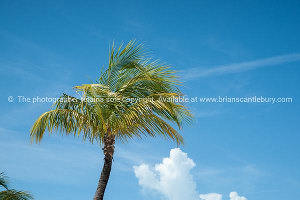 Palm against blue sky with cloud.<br /> Prints & downloads.