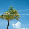 Palm against blue sky with cloud.<br /> Prints & downloads.