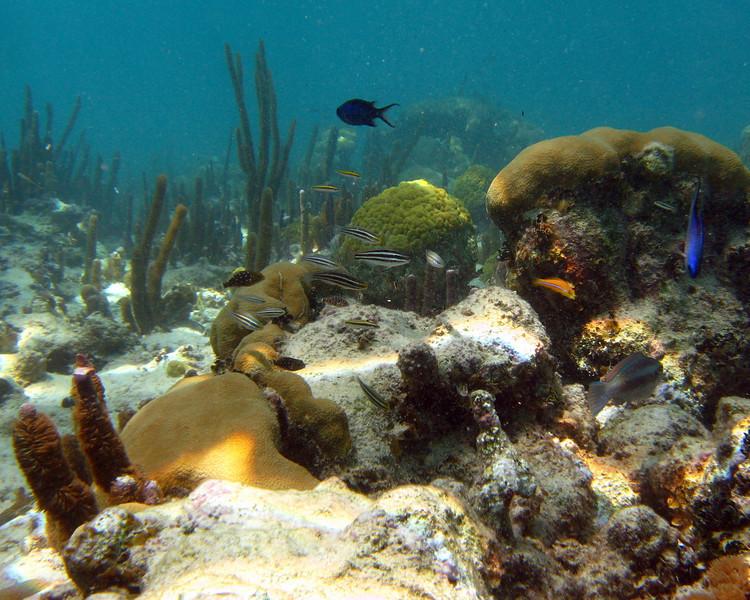Underwater Tabletop