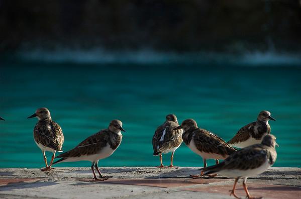 Birds hanging poolside