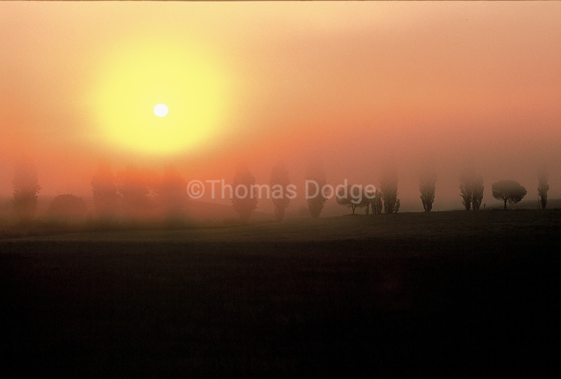 Morning fog, Tuscany, Italy.