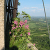 San Gimignano, in Tuscany, view from the tallest tower. These were snapdragons, growing way up in the air.