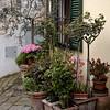 Castellina,  Tuscany 2006