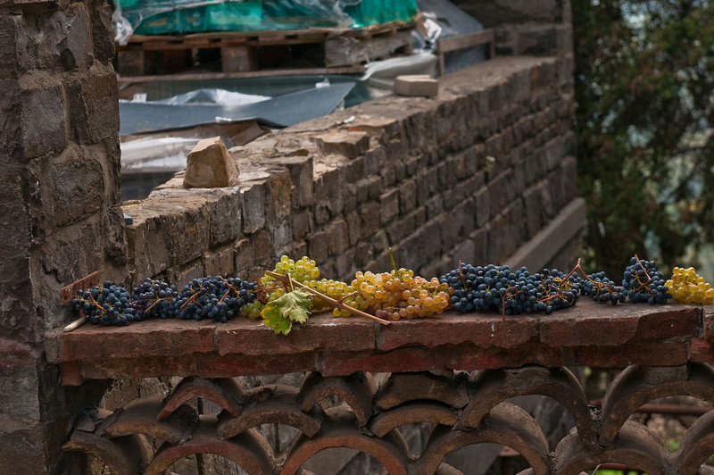 Grapes stacked outside the small winery in the village of Barbarino Val d'Elsa.