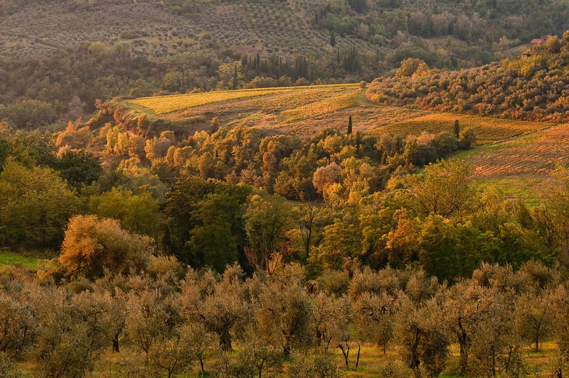 The autumn colors in this section of Tuscany gave an almost surreal sense of peace to the landscape.