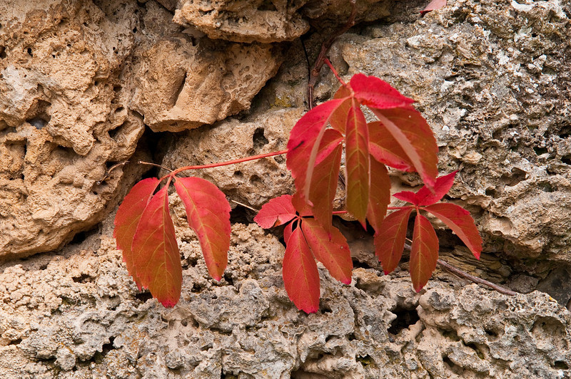 Autumn colors adorn rock walls and buildings in western Tuscany.