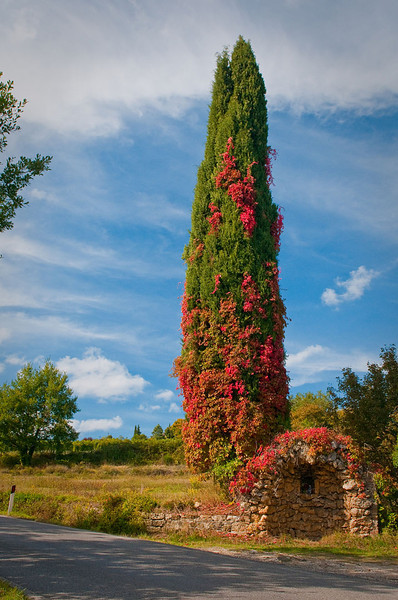 Fall colors adorn the local trees and walls in the rural countryside.