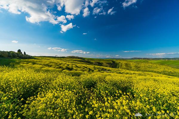 Yellow fields of Crete Senesi
