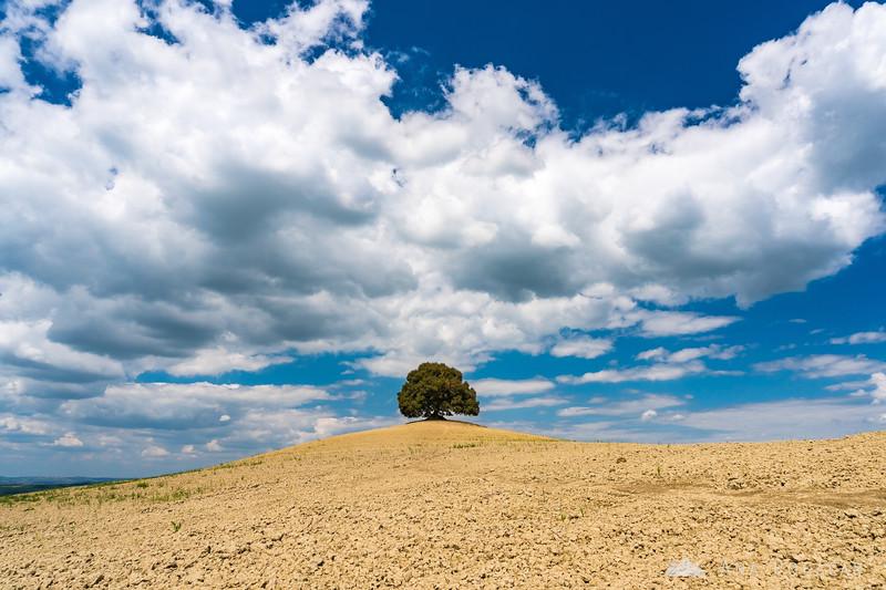 A solitary tree in Crete Senesi