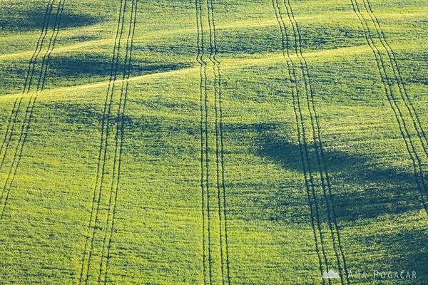 Fields in Crete Senesi