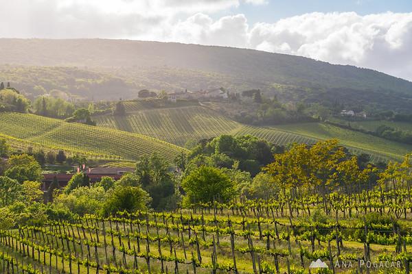 Fields and vineyards around San Gimignano