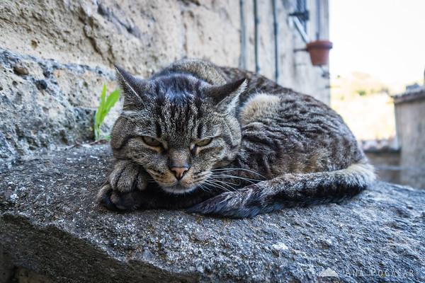 A cat in Sorano