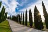 Cypresses of Agriturismo Bonello