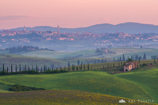 Rolling hills of Tuscany with Siena in the background at dawn