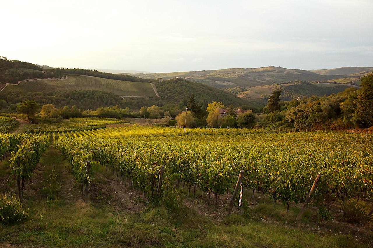 Tuscany Italy harvest time