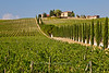 Cypress lined road through vineyards leads to the Casale dello Sparviero winery, Chianti region of Tuscany, Italy