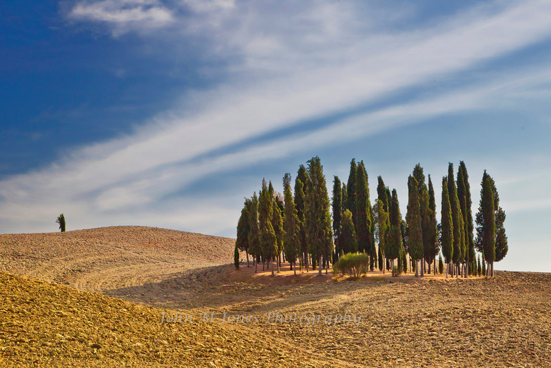 Grove of cypress trees thought to be an ancient Etruscan burial site, Tuscany, Italy