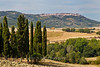 Cypress grove overlooking valley and typical hill town in Tuscany, Italy