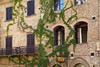 Windows and vines, San Gimignano, Tuscany, Italy