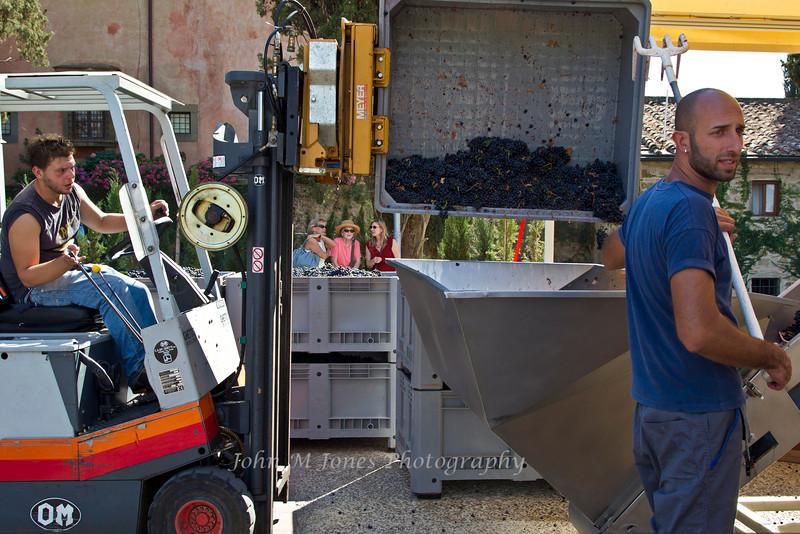 Workers processing grapes, Vignamaggio winery, Chianti region, Tuscany, Italy