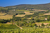 Vineyards near San Gimignano, Tuscany, Italy