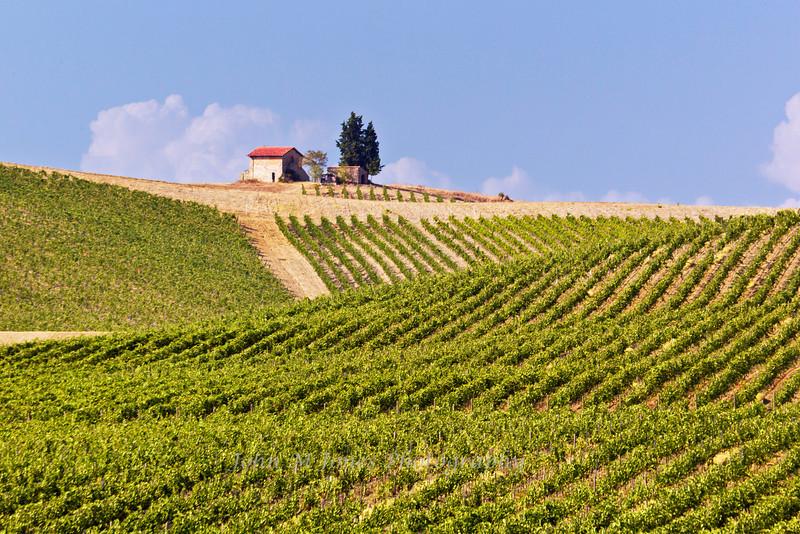 Vineyards of Casale dello Sparviero winery, Chianti region of Tuscany, Italy