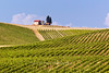 Vineyards of Casale dello Sparviero winery, Chianti region of Tuscany, Italy