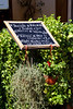 Lunch menu and herb basket, Greve in Chianti, Tuscany, Italy