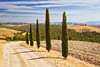 Road lined with cypress trees in Val d'Orcia, Tuscany, Italy