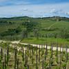 Chianti area, Italy