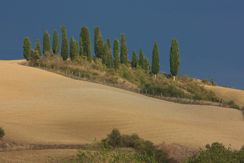 """Groups of cypress trees """"dance up the hillsides."""""""