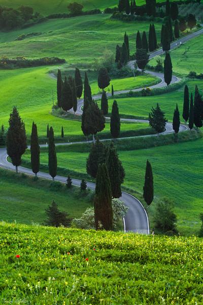 Road, Montepulciano, Tuscany, Italy