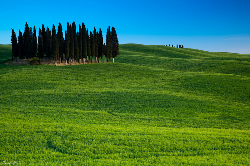 Group of cypresses, San Quirico d´Orcia, Tuscany, Italy