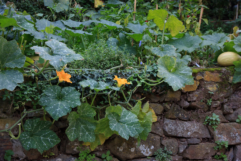 Every square inch of space in the Cinque Terre villages is used for cultivating vegetables.